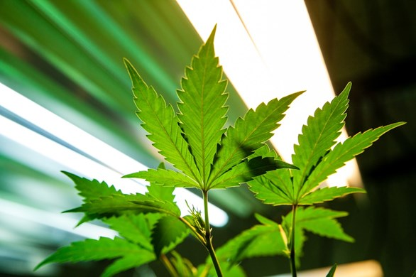 7 Types of Lighting Systems Suitable for Growing Marijuana