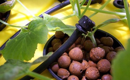 A Tale of Two Hydro Systems: Drip Irrigation & Ebb and Flow