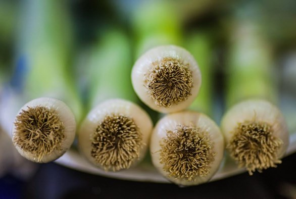 Hydroponic Leeks: A Not so Dirty Business After All