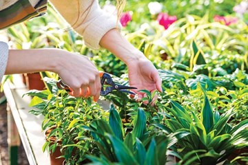 Do Your Plants Need Pinching or Pruning?