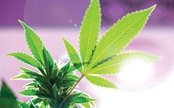 When it Comes to Cannabis, Not All Grow Lights are Created Equal