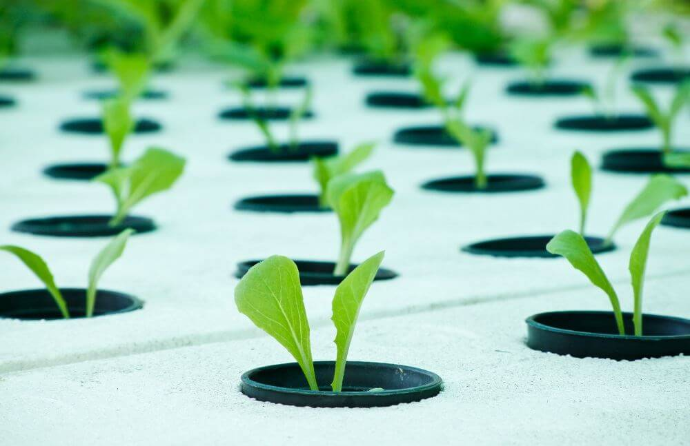 a description of the advantages of producing crops through use of hydroponics