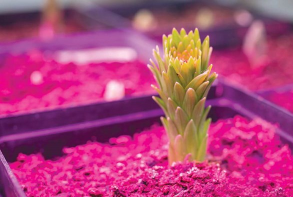 How Spectral Light Influences Plant Growth