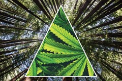Emerald Triangle: Where Outdoor Cannabis Grows & Grows
