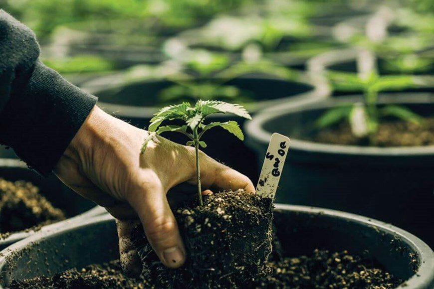 How to Reduce Your Grow Room's Operational Costs