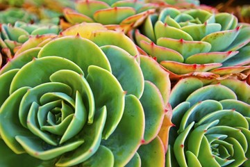 Being Green: How Plants Work