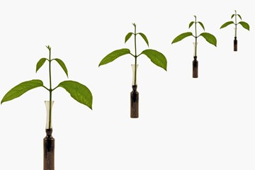 Cloning Your Plants