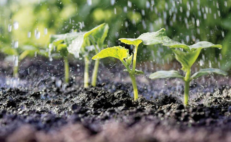 How to Detect and Treat Sulfur Deficiencies in Plants