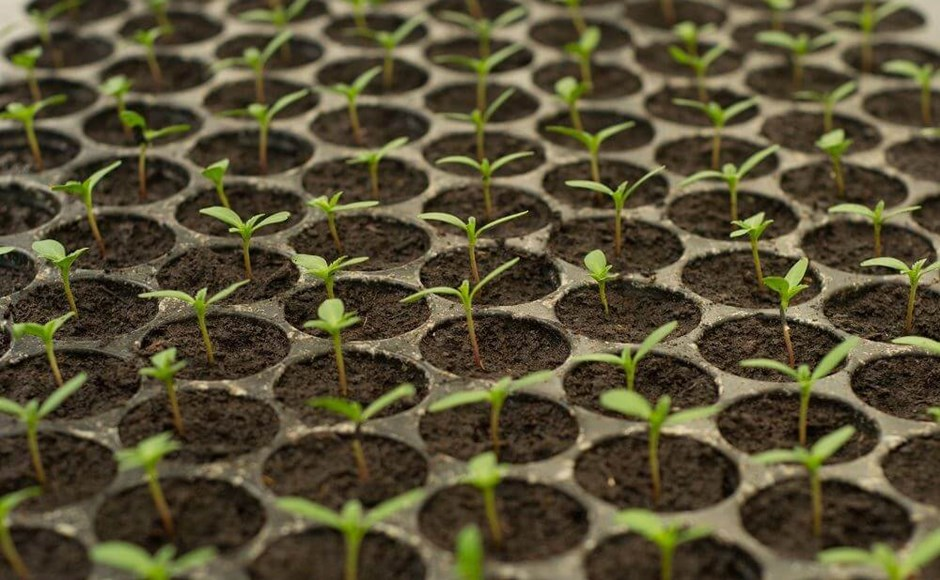 Cheap & Easy Starts: How to Germinate Seeds at Home