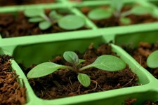 Why Growers are Crazy for Coco Coir