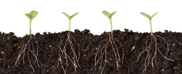 Humic or Fulvic Acid: What Kind are Your Plants On?