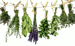 Pantry Prep: Preserving Homegrown Herbs