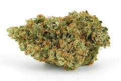 Cut & Dried Strain Review: Jack Herer