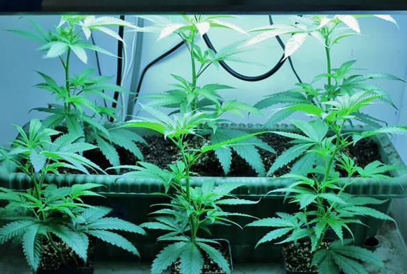 Growing 101: The Basics of Plant Lighting