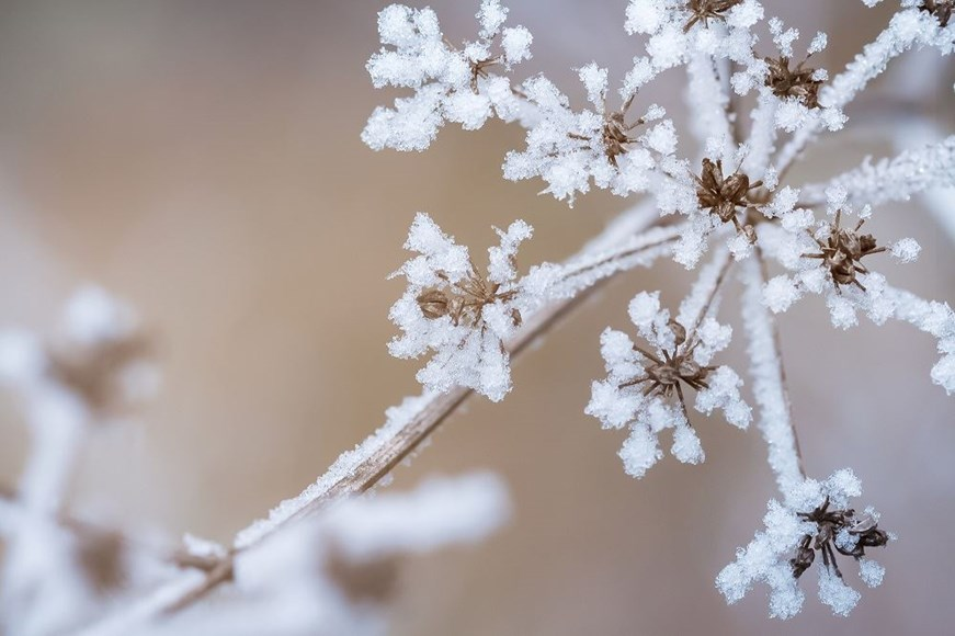 How Winter Weather Can Affect Your Indoor Garden