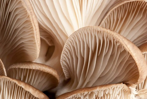 Mushrooms, Anyone?