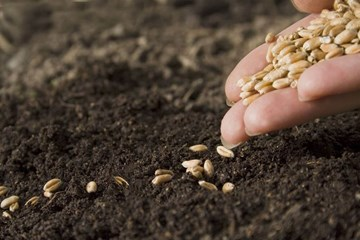 Seeds and Germination