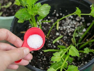 Can you use Epsom salts as a magnesium sulfate treatment for plants?