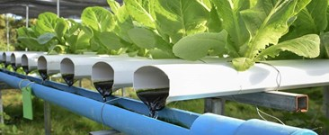 Hydroponics vs. Aquaponics: Which One is Right For You?