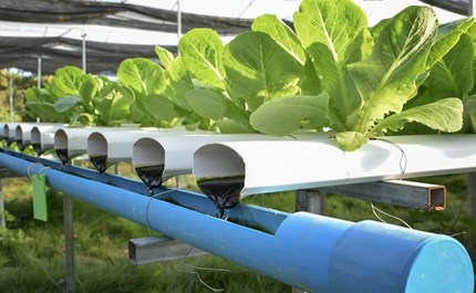 Hydroponics vs  Aquaponics: Which One is Right For You?