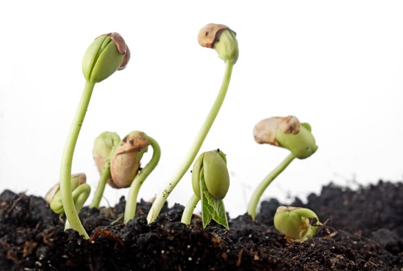 A Seed Saved: How to Harvest & Store Plant Seeds