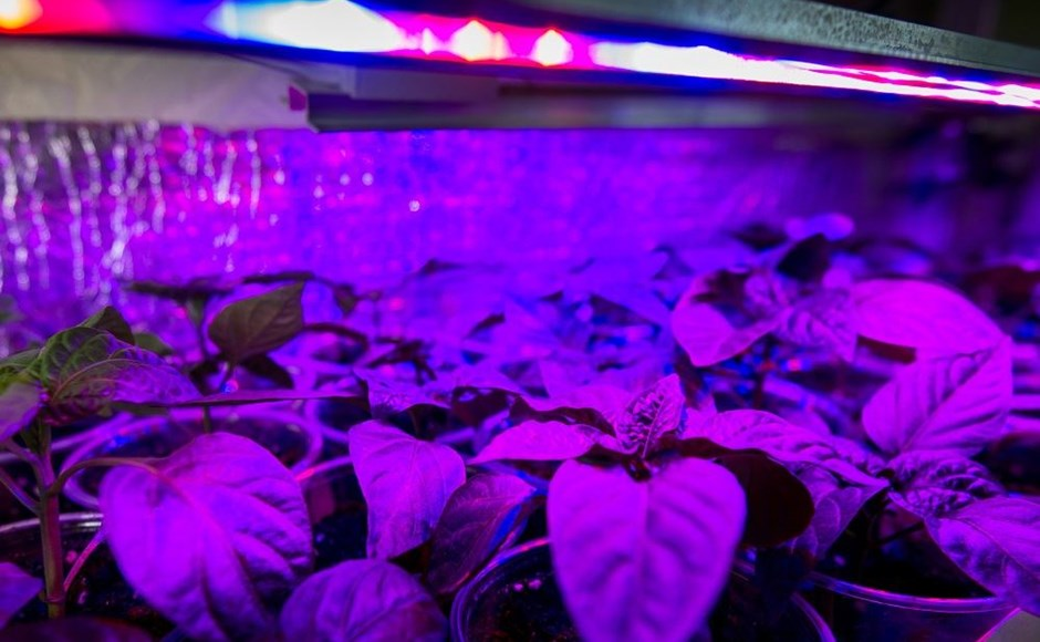 The Effects of LEDS on Plants