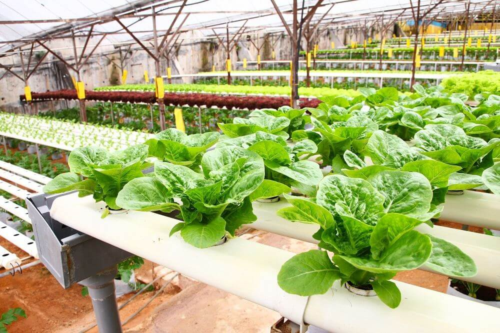 Growing 101 Choosing A Hydroponic System