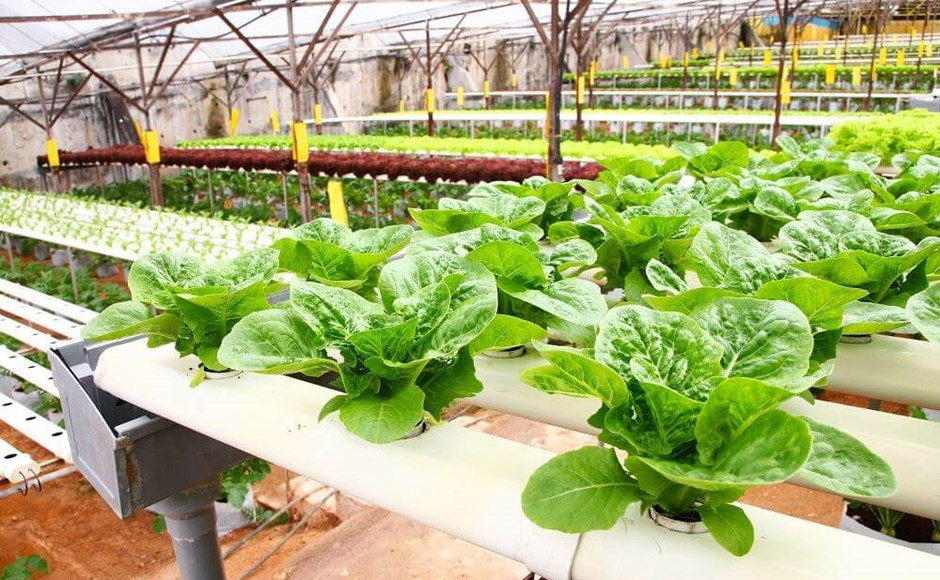 Growing 101: Choosing a Hydroponic System