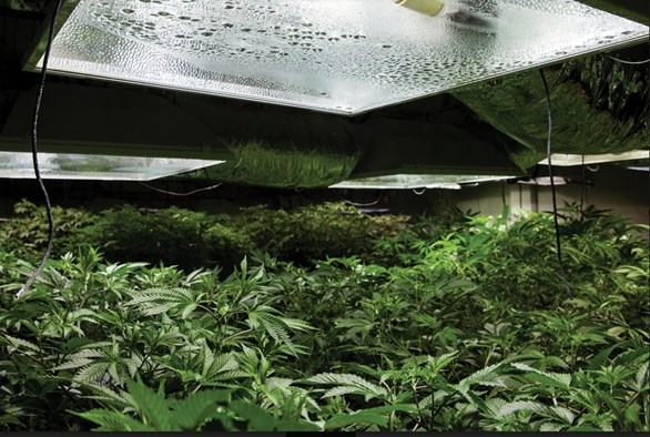 Choosing the Right Equipment for Your Cannabis Grow