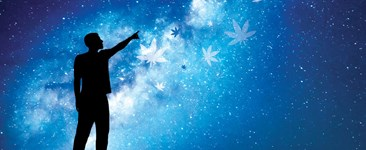 The (Light) Cycle of Life: Solstices, Equinoxes, and Growing Cannabis