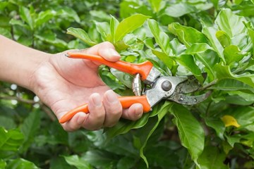 Are There Benefits to Pre-Sterilizing Your Pruners?