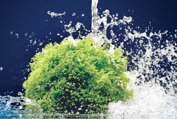 Hard Water or Soft Water: Does My Garden Care?