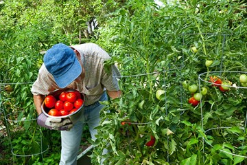 How to Extend the Life of Your Harvested Crops