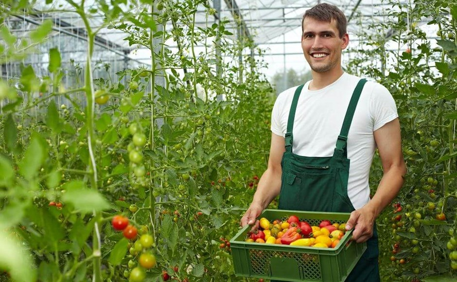 Harvest Hoedown: How to Get the Most Out of Your Harvest