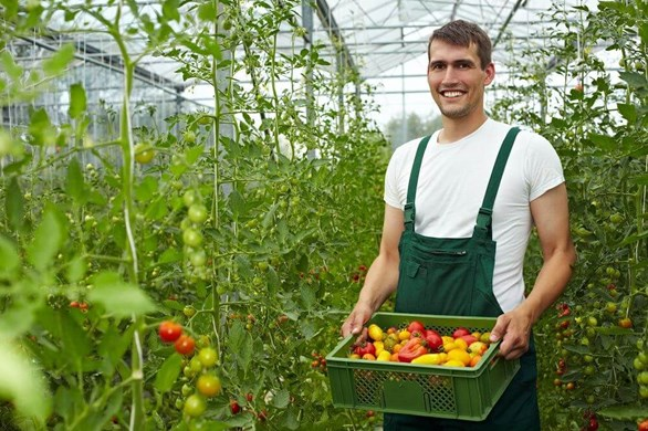 How to Maximize Your Tomato Yields
