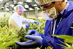 BC's Best Bud: Tilray, One of Canada's Top Licensed Producers of Medical Marijuana