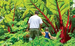 How to Build a Food Forest