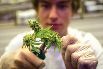 Cultivating with Kushman: Oaksterdam University and Kyle Kushman Offer Cannabis Classes for the Masses