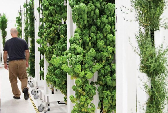 Top 3 Reasons Why Vertical Farms Fail