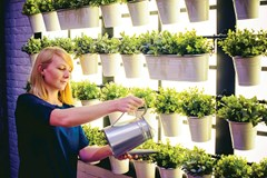 Organic Gardening Practices You Can Implement Indoors