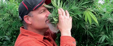 What's In Your Growroom? Behind the Scenes with Mr. Bud Green