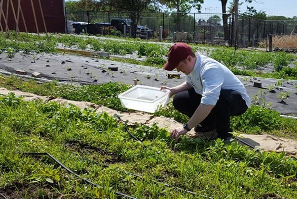 Growing for Health: Fertilizer Recommendations