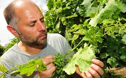 Think Small to Eliminate Powdery Mildew