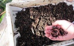 Vermicompost: Micronutrient Rich Fertilizer From Worms