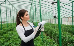 Maintaining Control in the Greenhouse