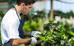 Gardening 101: A Back-to-Basics Primer for Growing