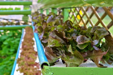 Tips for Starting Your Own Hydroponics System