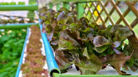 If you're thinking about building your own at-home hydroponic system, your best bets are either a nutrient film technique setup or an ebb...