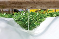 Hydroponic Float system