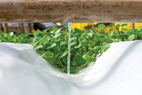 Hydroponic Systems: From Rafts to Raceways & Everything In-between